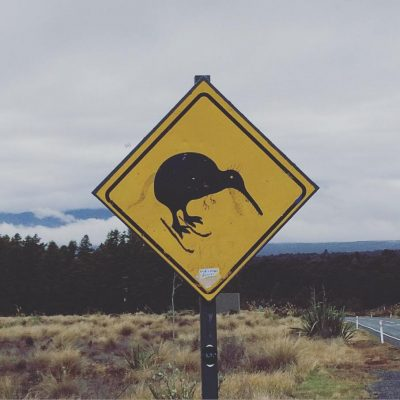 Common Kiwi, street art