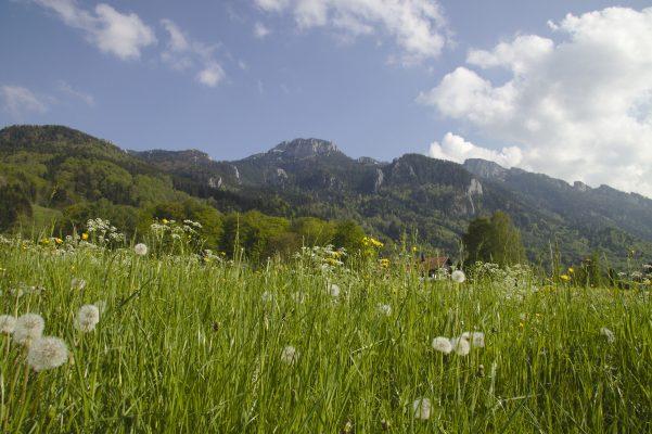 Tirol_wiese_aschau_kampenwand